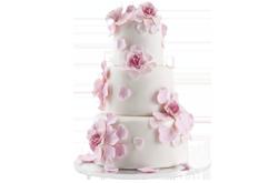 http://drouga.com/cms/wp-content/uploads/2018/05/wedding_cake_web.png